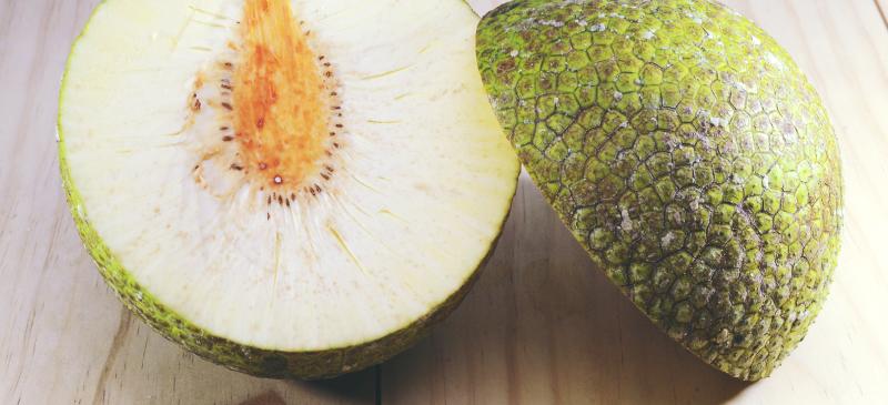 Nutrition et arbre à pain Faits Bienfaits pour la santé